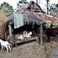 Chitwa NP